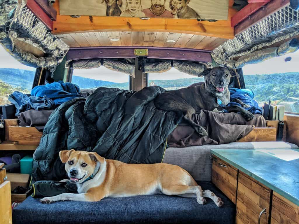 Vanlife with Dogs: Tips, Challenges, and Fun on the Road